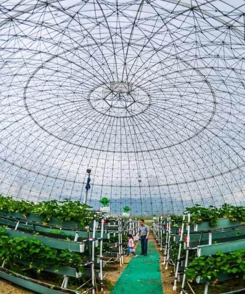 Проектирование сельскохозяйственных объектов